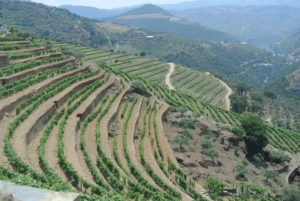 Awe inspiring vineyards on terraces