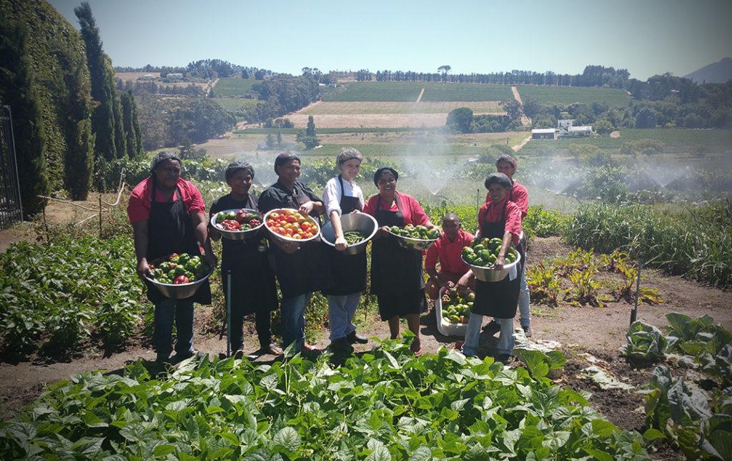 Our organic veggie garden