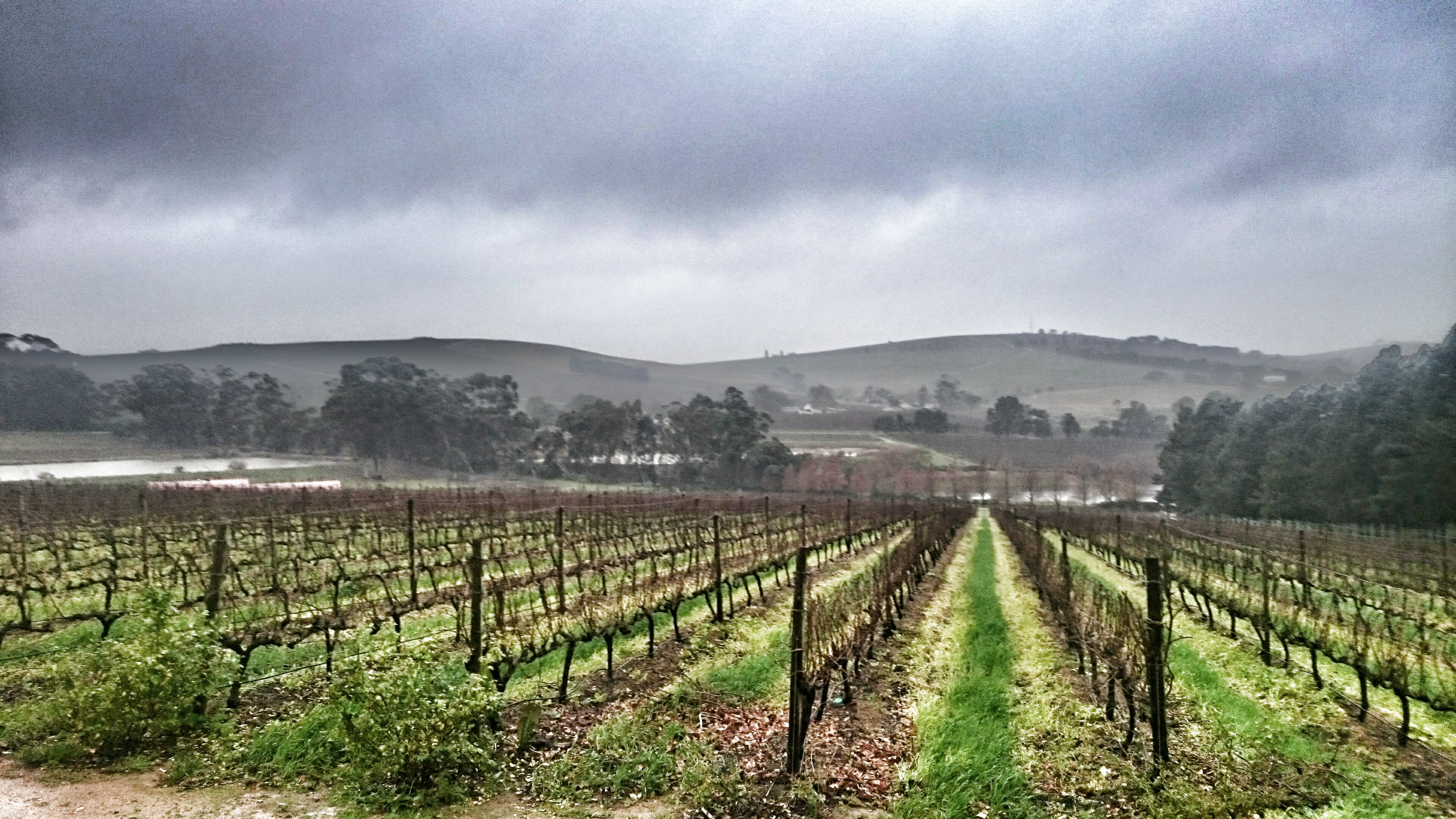 Who said vineyards can't be beautiful in the winter?